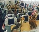 फस्र्ट क्लास की टिकट बुक कर बाजों को करवायी गई हवाई यात्रा