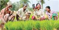 Budget-2015: Farmers