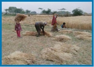 यमुना कटरी के गांवों में गिरे ओले