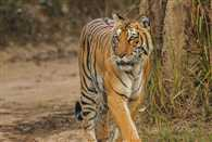 NTCA stoped project of Corbett Tiger Safari