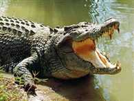 Woman fights back crocodile, escapes from jaws of death