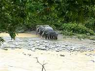 Elephant trapped in River due to rising of water levels
