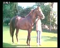 Rajasthan businessman purchases horse for Rs 1.11 crore