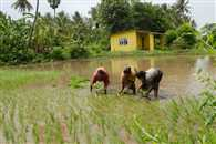 Deficit rain in June keeps kharif sowing sluggish