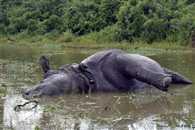 Flood waters entered Kaziranga, animal suffering