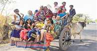 In MP village, bullock cart ride costs more than Indore-Delhi air fare