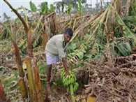 unseasonable rain damage crops , five farmers died due to shock
