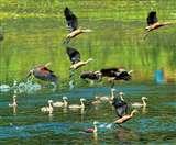 भारत में पक्षी प्रेमियों के लिए 10 खूबसूरत जगहें