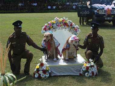 Dogs Wedding Rituals Sri Lanka