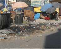 Driving thrust of sanitation, no change photo