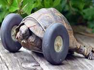 Did You Know Turtles Can Skate?