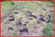 terror of elephants