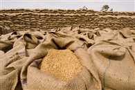 Wheat import volume expected to increase in coming months