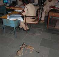 cats for rat patrol inGRP police station