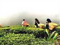 tea garden shut down, Girls forced to become sex workers