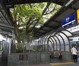 स्टेशन के बीच खड़ा है ये पेड़ जिसने भी काटा उसकी हो गई मौत