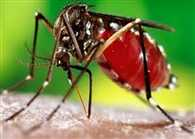 Dengue costing India over 1 billion dollar per year said Study