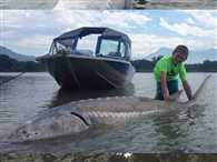 9-year-old New Jersey boy catches 273-kg sturgeon during B.C. fishing trip