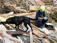 NDRF dog will search for people buried under the debris