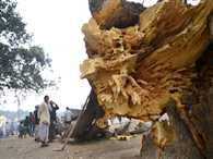 Tree collapse in Magha Mela area, 26 injured