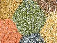 government will Import Five thousand tons Pulses