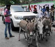 Builder Posed by donkeys their first Land Cruiser in Surat