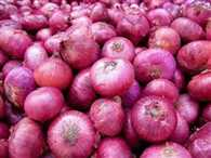 Onion prices will come down , the first tranche of 250 tons arrived in India
