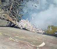 Thousands of dead fish were found in the river panihari