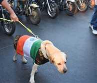 Insulting national flag,  flag covered pet dog