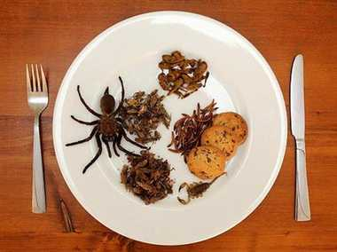 Insects on your dinner plate a reality  soon