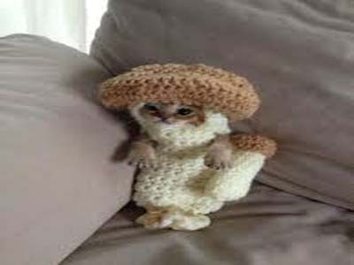 Chan Kitten Mushroom Costume