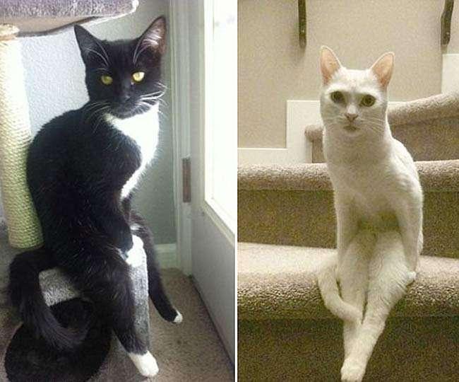 Image result for बिल्ली के ये अंदाज पर