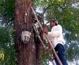 इस पेड़ से निकल रही है बीयर, देखने वालों का लगा जमावड़ा