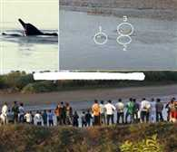 Three dolphins reach riverbank due to Oshaba storm