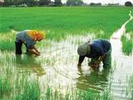 Now water for irrigation to every agriculture field