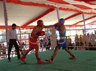 state boxing championship