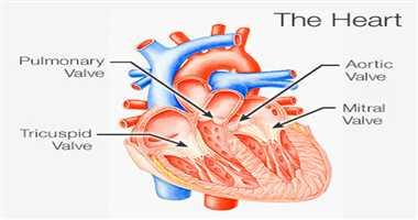 Heart disease - Valve disorders