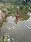 तालाब में जहरीला पदार्थ डालने से मछलियां मरी