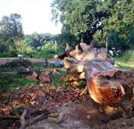 green trees cutting