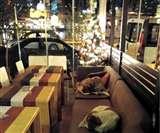 अनोखा कैफे जहां रात को आकर सो जाते हैं Street Dogs