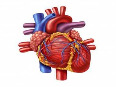 Treatment for heart valve disease