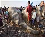 100 दिनों में 40 हाथियों की मौत, सामने अाईं दिल दहला देने वाली तस्वीरें