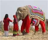 यहां हाथियों को भी पहनाये जाते हैं स्वेटर