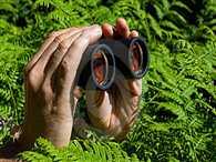 mla son arrest over wating girls through binoculars