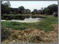गंदे पानी के गड्ढे में बदला लुधपुरा का तालाब