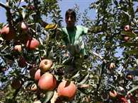 Now apple challange for Army in JK