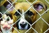 पाकिस्तान में एक कुत्ते को सुना दी सजा ए मौत