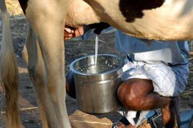 Cows' milk protects against HIV