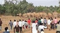 झारखंड ओडिशा सीमा पर हाथियों का झुंड, आतंक