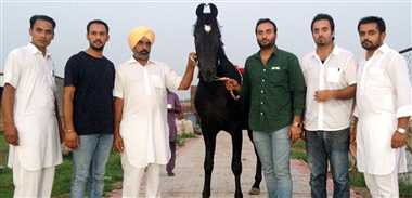 horse of 31 lakh